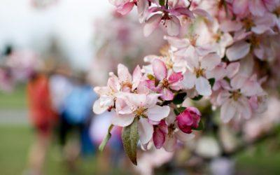 East Devon Easter Events Guide